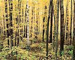 Forest, Algonquin Provincial Park, Ontario, Canada