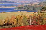 Bleuetière à l'automne, Kingston Creek, Nouveau-Brunswick, Canada