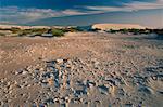 Zone rocheuse dans les Dunes, Boulderbaai, côte ouest NAT. PK., Northern Cape, en Afrique du Sud