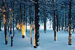 Arbres dans la neige, Bluff, Nouveau-Brunswick, Canada de personne