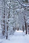 Cedar Grove, couverte de neige, Bluff, Nouveau-Brunswick, Canada de personne