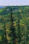 Alaska Highway, Near Stone Mountain Provincial Park, BC, Canada