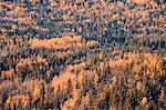Colline le long de la rivière Sheep, Kananaskis Country, Alberta, Canada