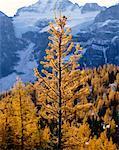 Vallée Larch, Parc National Banff, Alberta, Canada