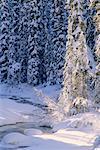 La rivière Maligne en hiver, le Parc National Jasper, Alberta, Canada