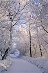 Vallée de la rivière en hiver, Edmonton, Alberta, Canada