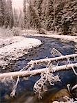 Wardle Creek, Parc National Kootenay, en Colombie-Britannique, Canada