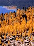 Automne mélèze, Shadow Lake, Parc National Banff, Alberta, Canada