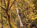 Shepperd's Dell Falls in Autumn, Columbia River Gorge, Oregon, USA