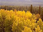 Autumn Colours, Jasper National Park, Alberta, Canada