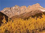 Autumn Scenic, Waterton National Park, Alberta, Canada