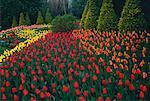 Tulips in Garden, Cullen Gardens, Whitby, Ontario, Canada