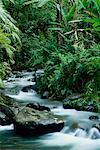 Forêts et cours d'eau
