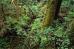 Rainforest Vancouver Island British Columbia, Canada