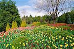 Tulips Cullen Gardens Whitby, Ontario, Canada
