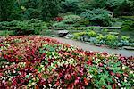 Begonias in Botanical Garden Royal Botanical Gardens Hamilton, Ontario, Canada