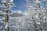 Neige couvertes d'arbres par les montagnes de l'Alberta, Canada