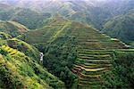 Banaue terrasses de riz de Banaue, Ifugao, aux Philippines