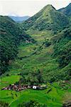 Petite terrasse-agriculture ville Philippines
