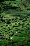 Banaue terrasses de riz de Banaue, Ifugao aux Philippines