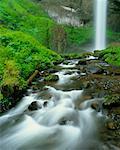 Chute d'eau et forêt Latourelle Falls Columbia River Gorge Oregon, Etats-Unis