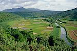 Champs de taro, vallée Hanalei, Kauai, Hawaii, Etats-Unis
