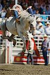 Rodeo Calgary Stampede Alberta, Canada