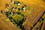 Farmland from Balloon Si Satchanalai, Thailand
