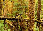 Mousse couvertes d'arbres dans la forêt du Parc National Pacific Rim Vancouver, Colombie-Britannique Canada