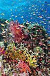 Scenic sous-marine