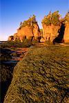 Flowerpot Rocks Bay of Fundy, Hopewell Cape New Brunswick, Canada