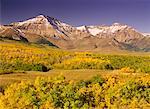Montagnes et forêt en automne (Alberta) Canada