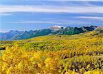 Vue d'ensemble de la forêt et les montagnes de l'Alberta, Canada