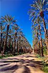 Car on Palm Tree-Lined Road California, USA
