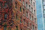 Ivy couverts bâtiment English Bay, Vancouver, Colombie-Britannique, Canada