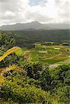 Farmland Kauai, Hawaii