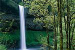 Sud chutes Silver Falls State Park, Oregon, Etats-Unis