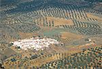 Espagne, Andalousie, Village entouré d'oliviers