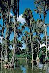 United States, Florida, Orlando, cypress garden