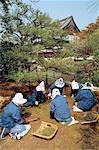 Japon, jardiniers de Kyoto, Temple de Nijo, au travail