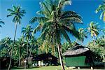 French Polynesia, Moorea island, houses and palm trees