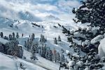 France, Alps, La Plagne, pines in snowy landscape