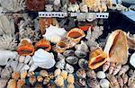 Étal de fruits de mer de Portugal, Lisbonne,