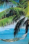 Polynésie française, l'île de Tahiti, hamac