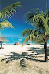 Mauritius, beach and palms