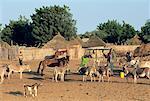 Au Sénégal, pays Wolof, Cayor