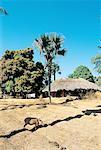 Paysage rural de Casamance, Sénégal
