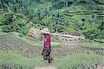 Indonesia, Bali, paddy fields near Ubud and peasant
