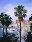 Croatie, Dubrovnik et port entouré de palmes