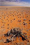 Shrub in Desert Southern Namibia Africa